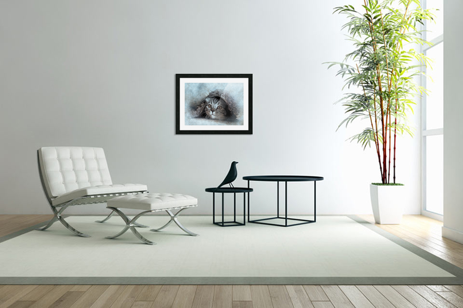 kitty in Custom Picture Frame