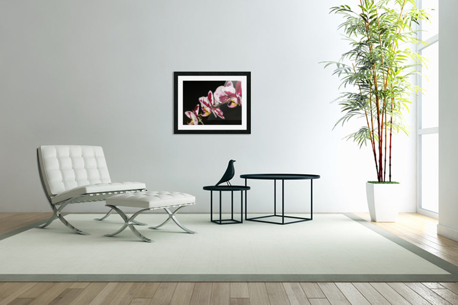 Sexy Orchid in Custom Picture Frame
