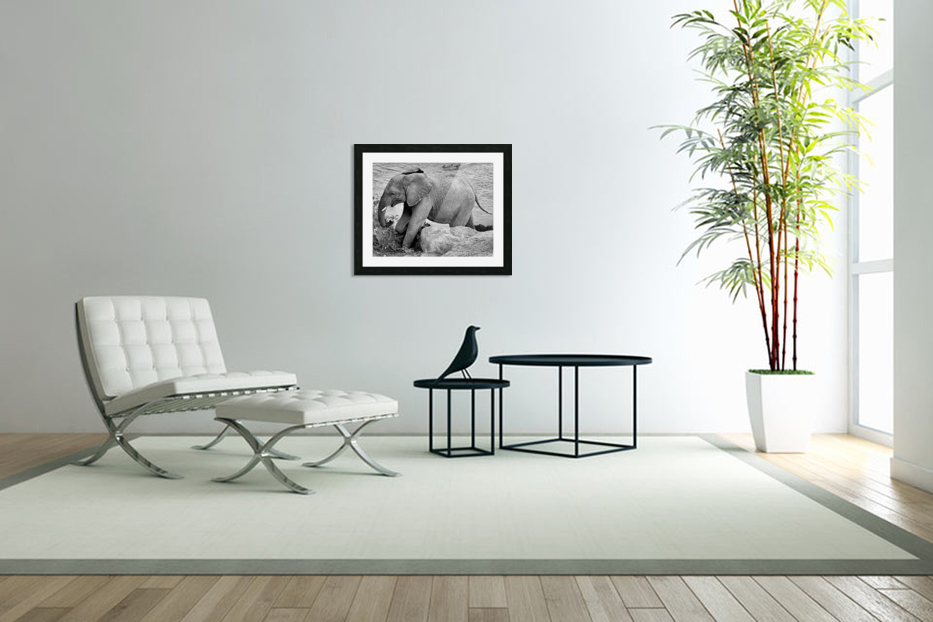 Elephant Baby in Custom Picture Frame