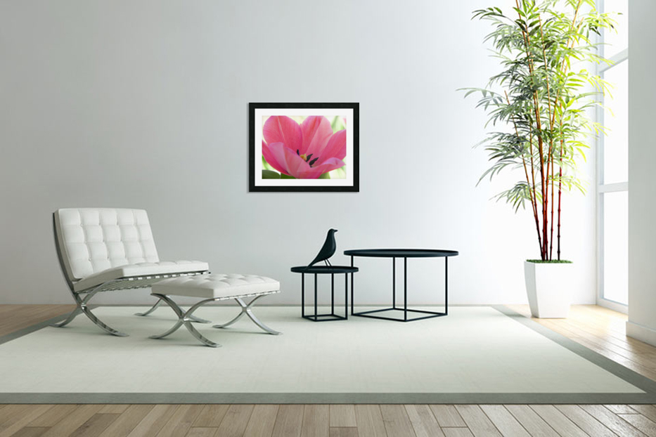 Beautiful Pink Tulip Photograph in Custom Picture Frame