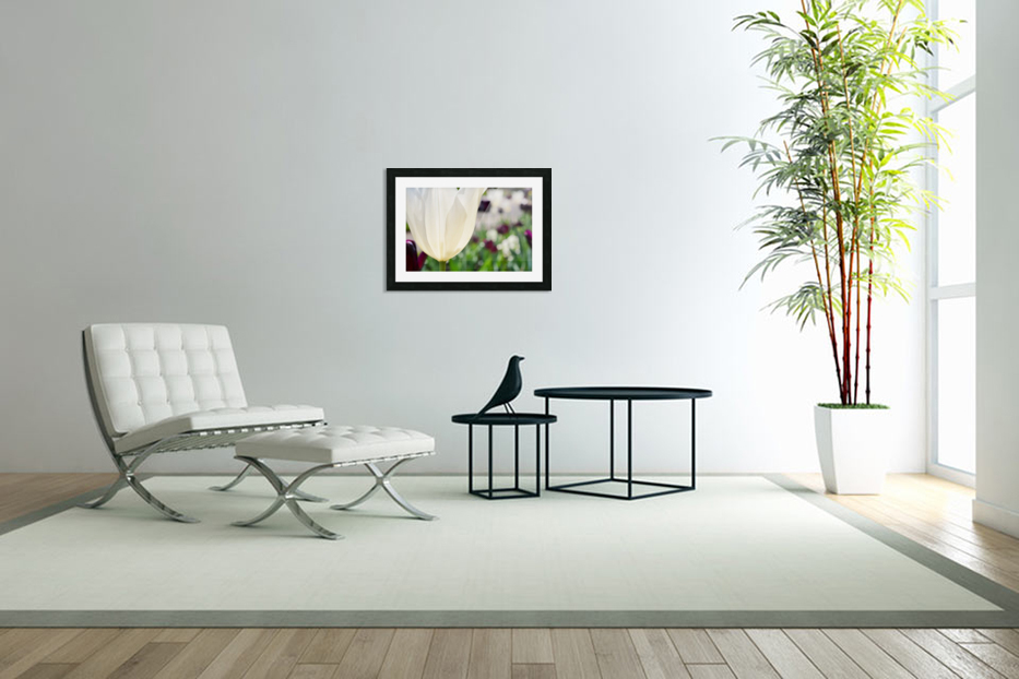 White Tulip Photograph in Custom Picture Frame