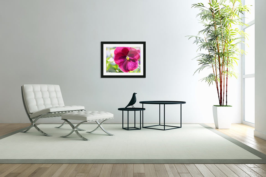 Pink Pansy Photograph in Custom Picture Frame