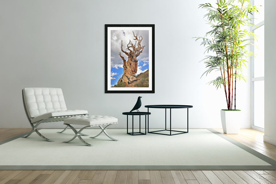Ageless in Custom Picture Frame