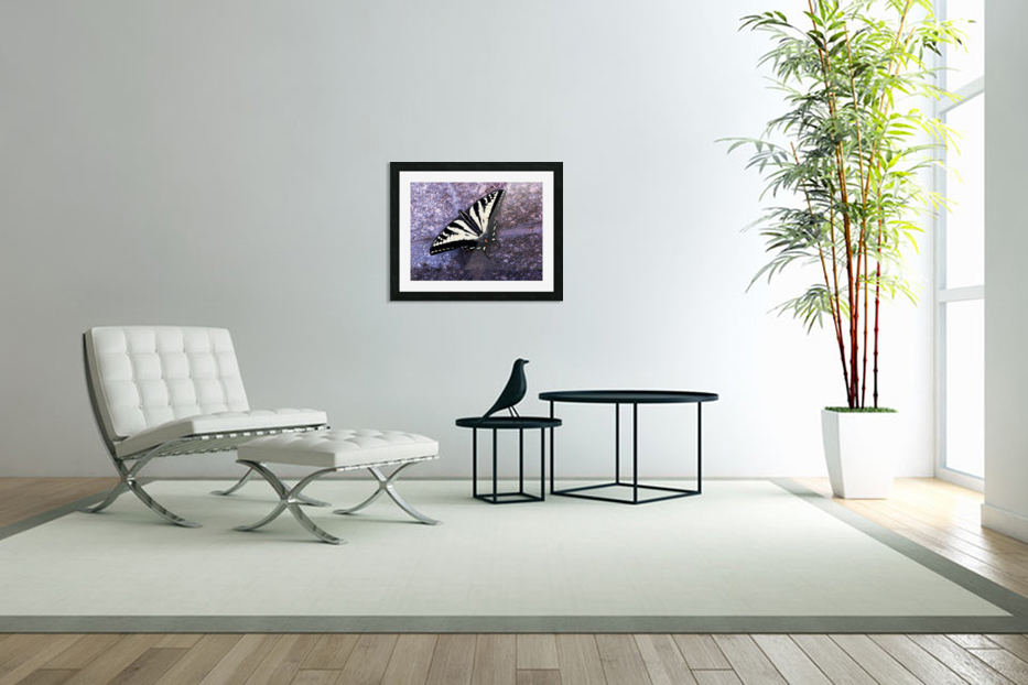 Swallowtail on Stone Wall in Custom Picture Frame