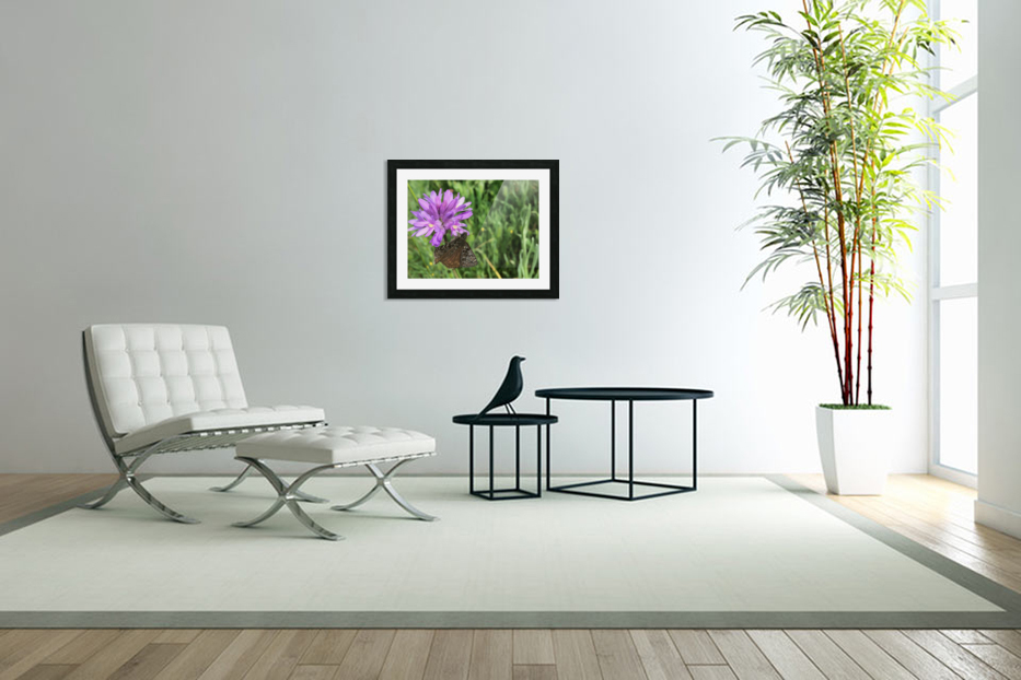 Butterfly on Wildflower in Custom Picture Frame