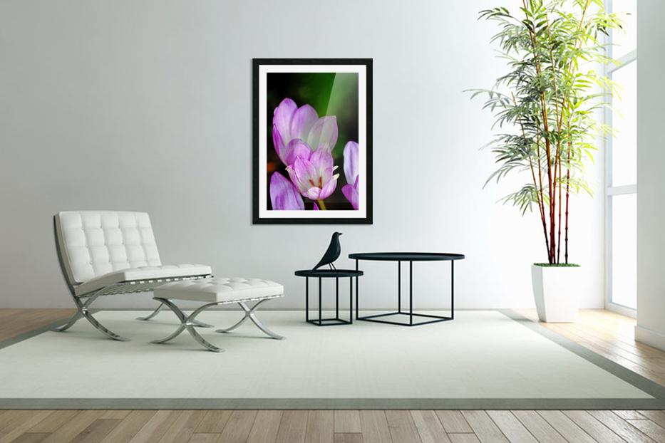 Fall Crocus in Custom Picture Frame