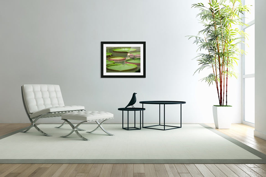 Lily Pads in Custom Picture Frame