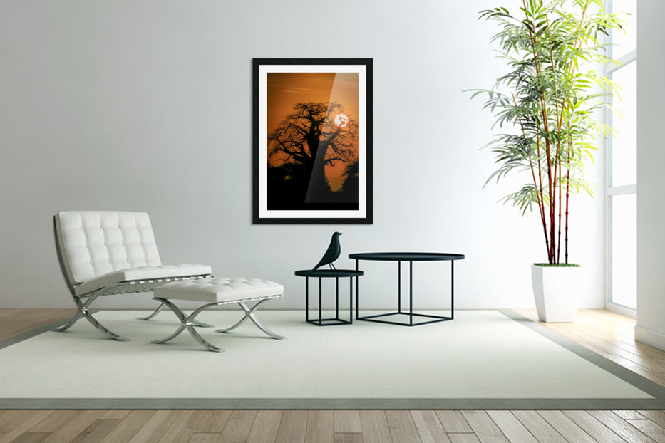 Baobab Sunset in Custom Picture Frame