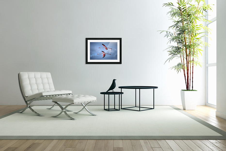 Greater Flamingos in Custom Picture Frame
