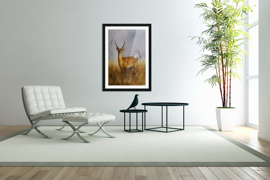 Waterbuck in Custom Picture Frame