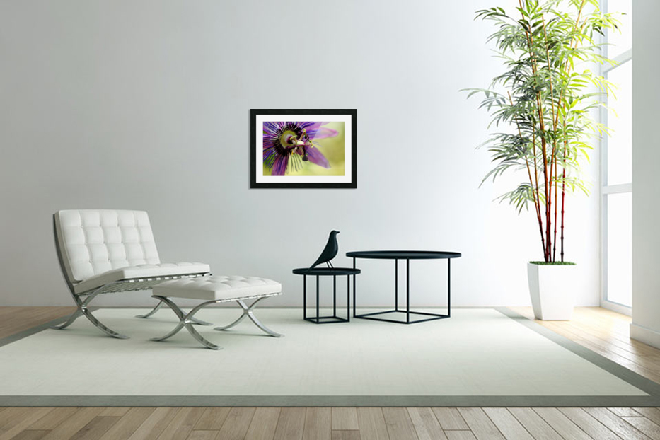 Purple Passion Flower in Custom Picture Frame