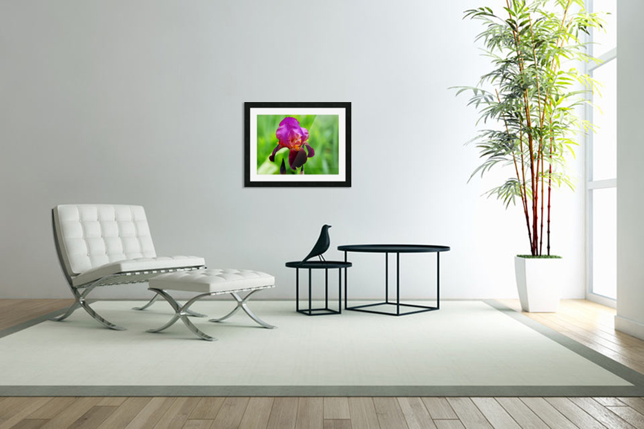Bold And Beautiful in Custom Picture Frame