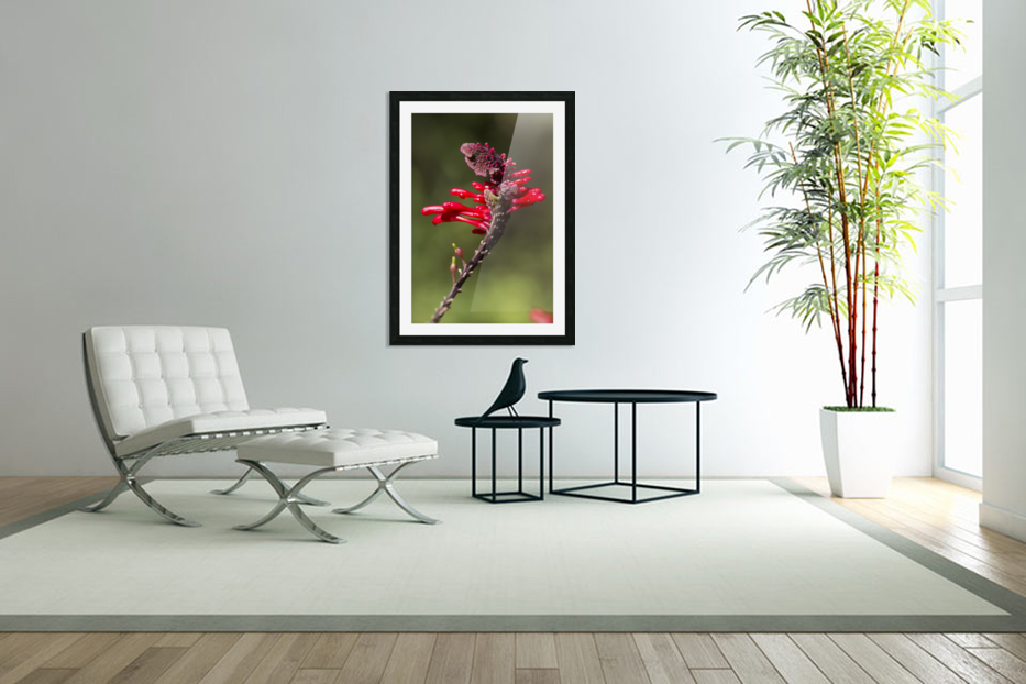 Red Flower in Custom Picture Frame