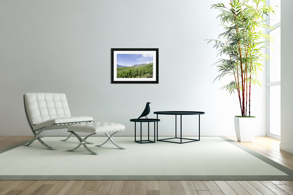Okanagan Valley winery in Custom Picture Frame