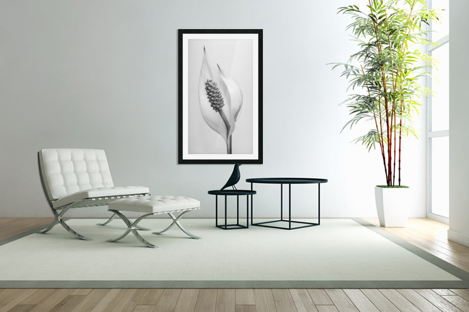 Peace lily in Custom Picture Frame