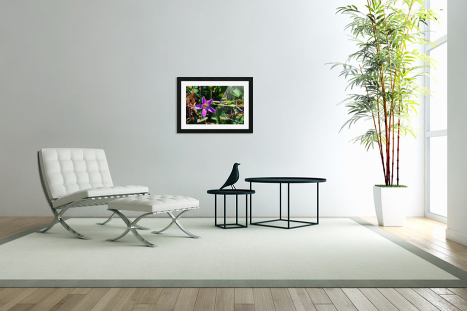 Flowers in Custom Picture Frame