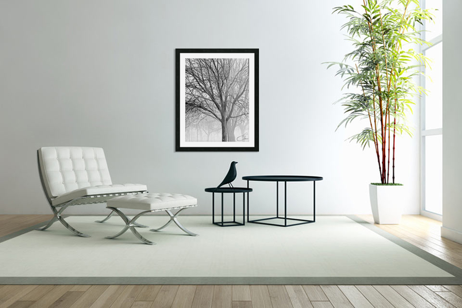 Trees in the Mist in Custom Picture Frame
