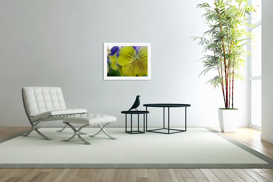 Yellow Pansy Photograph in Custom Picture Frame