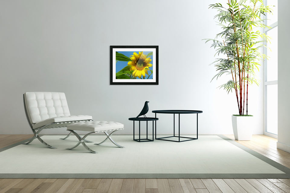 Sunflower in Custom Picture Frame