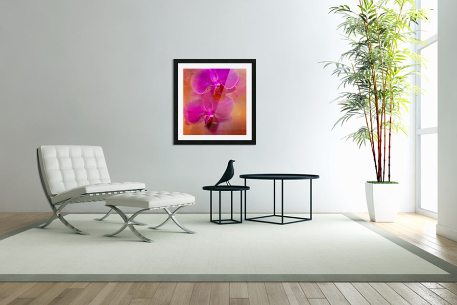 Colorful Phalaenopsis in Custom Picture Frame