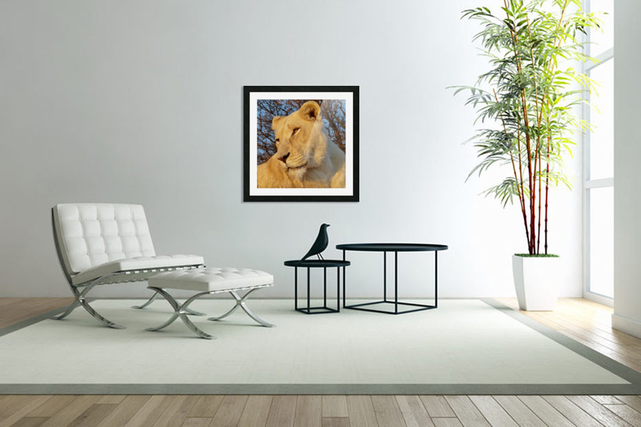 White Lioness Sunset 593 in Custom Picture Frame