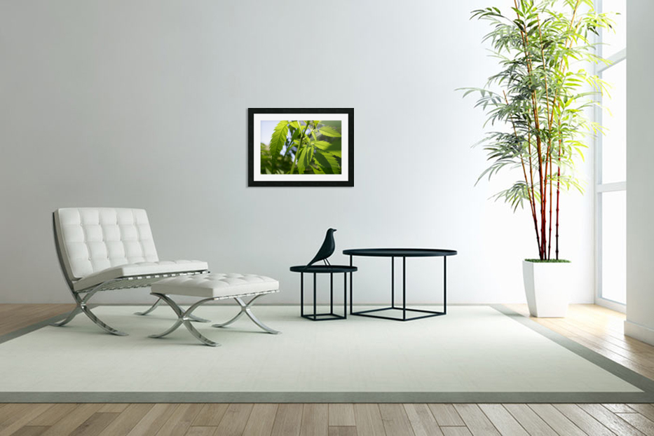 leaf with light in Custom Picture Frame