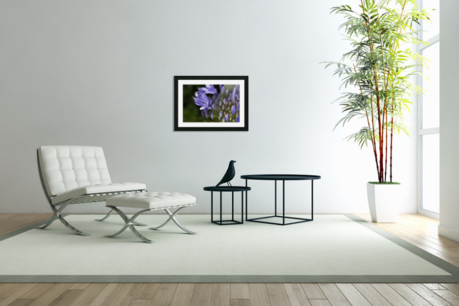 Agapanthus Blue in Custom Picture Frame
