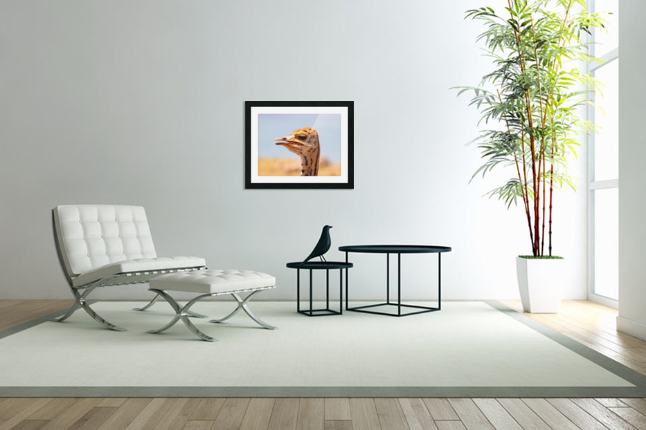 Baby Ostrich 5378 in Custom Picture Frame