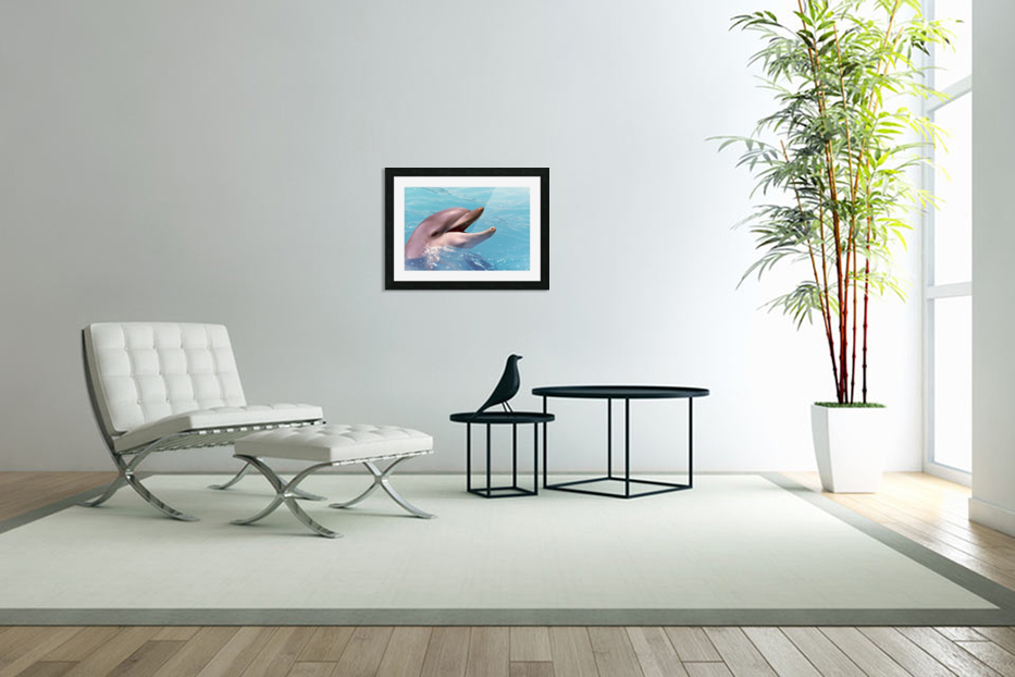 Happy Dolphin Photograph in Custom Picture Frame