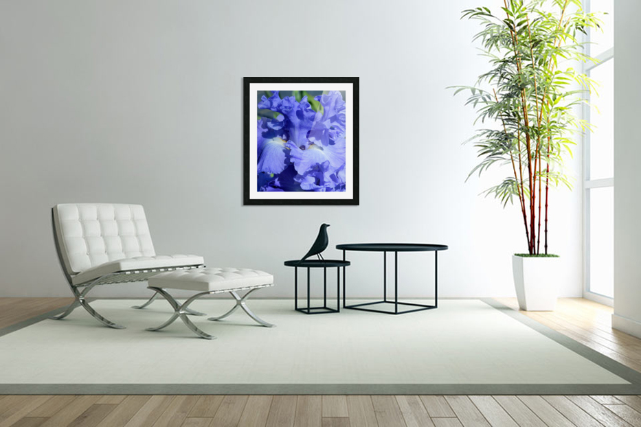 Metoleus Blue Bearded Iris in Custom Picture Frame