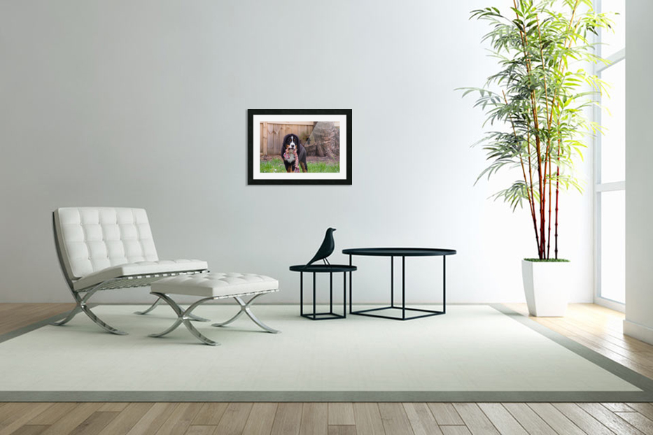 Bernese Mountain Dog Puppy 8 in Custom Picture Frame