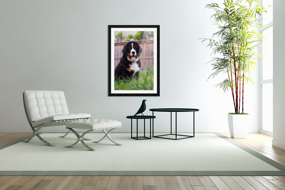 Bernese Mountain Dog Puppy 1 in Custom Picture Frame