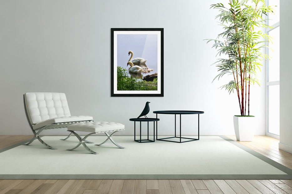 Swans and Sygnets on lake in Custom Picture Frame