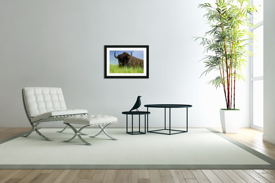 Female Bison in Custom Picture Frame