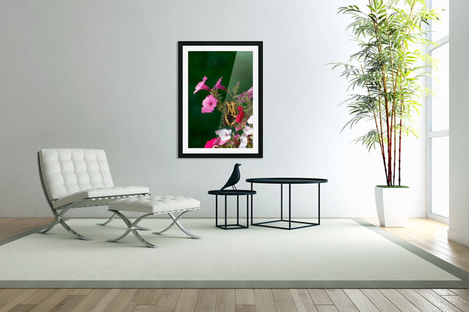 Butterfly on petunias in Custom Picture Frame