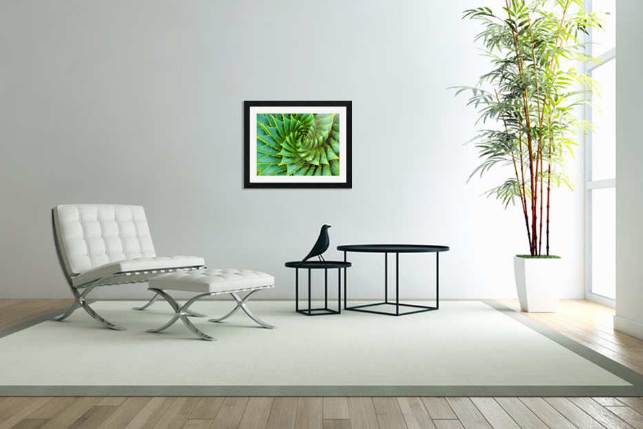 Cactus Spiral in Custom Picture Frame