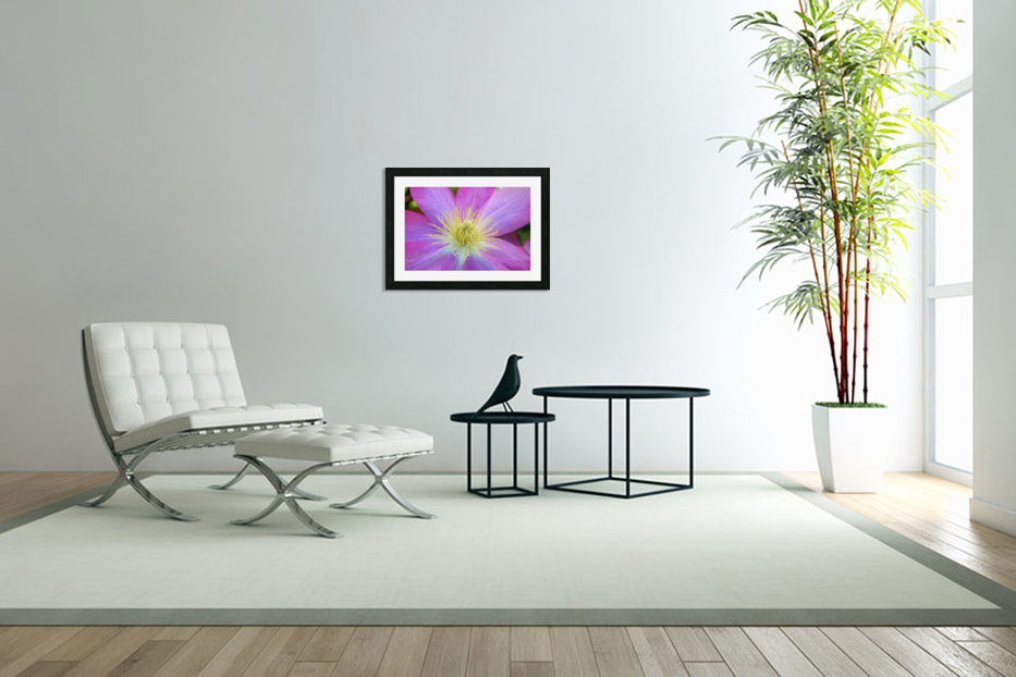Purple Clematis in Custom Picture Frame