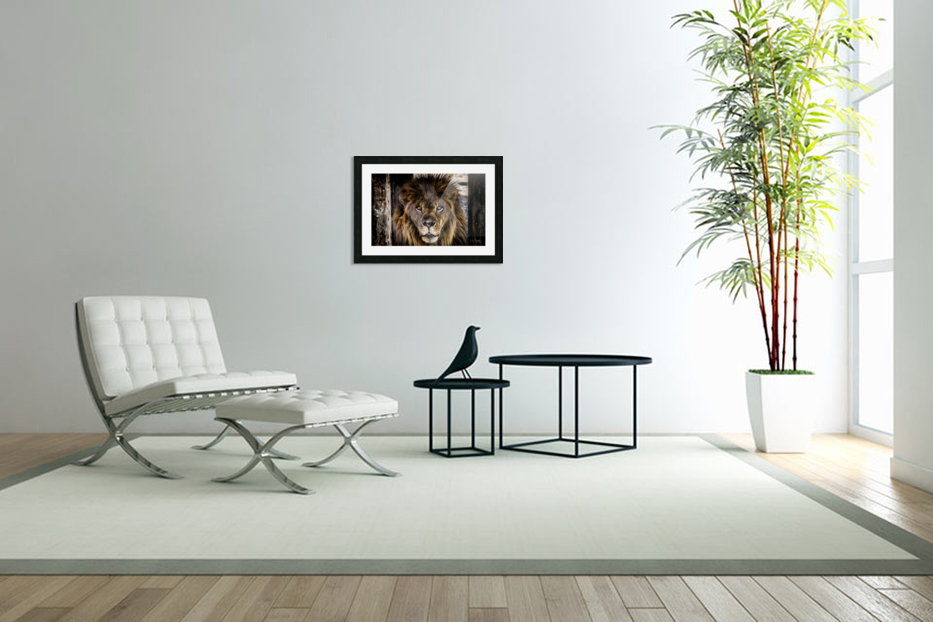 A Regal Lion in Custom Picture Frame