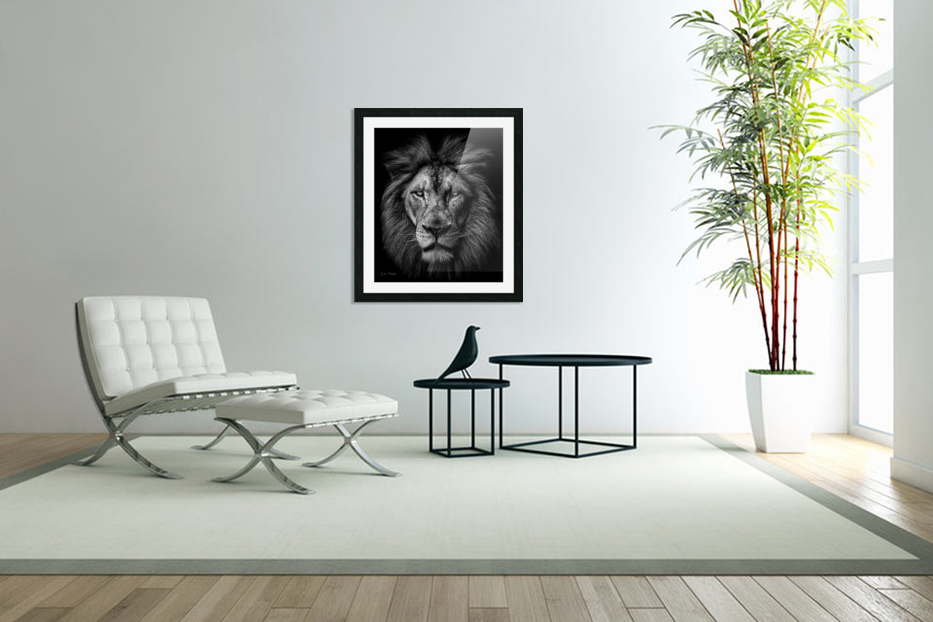 A Lion in Black & White in Custom Picture Frame
