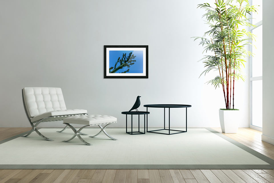 Yucca Skies in Custom Picture Frame