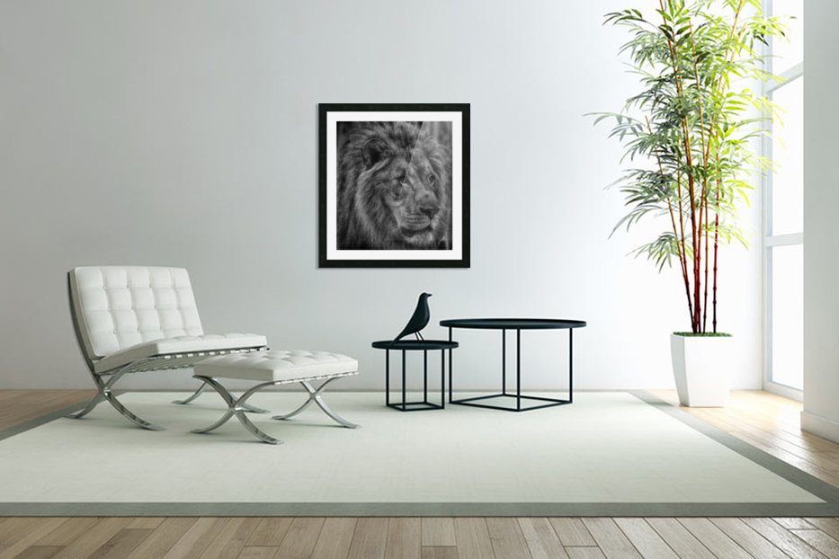 Artistic black and white Lion in Custom Picture Frame