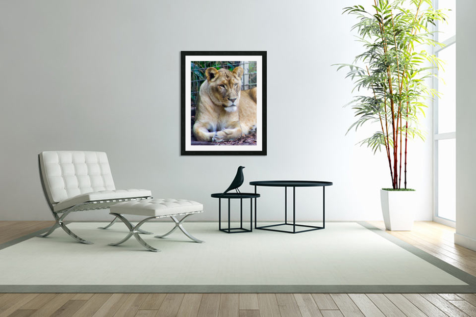Lioness in Custom Picture Frame