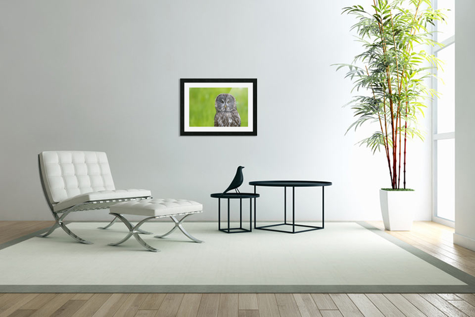 Great Grey Owl - Grey on Green in Custom Picture Frame