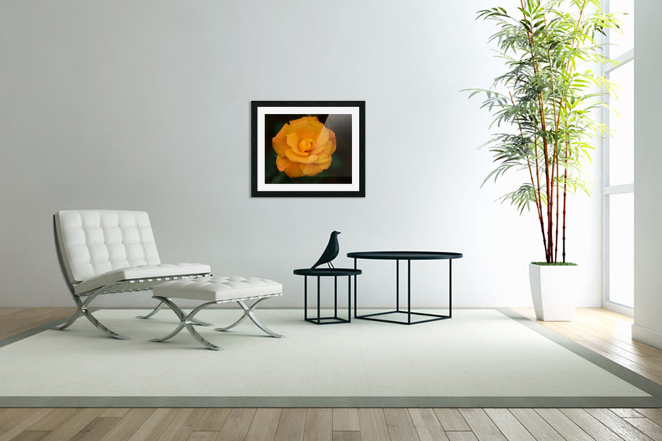 Orange Rose in Custom Picture Frame