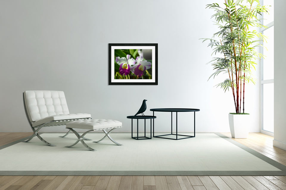 Purple And White Orchids in Custom Picture Frame