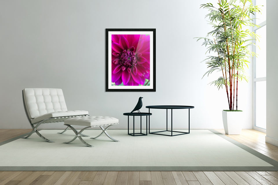 Dahlia in Custom Picture Frame