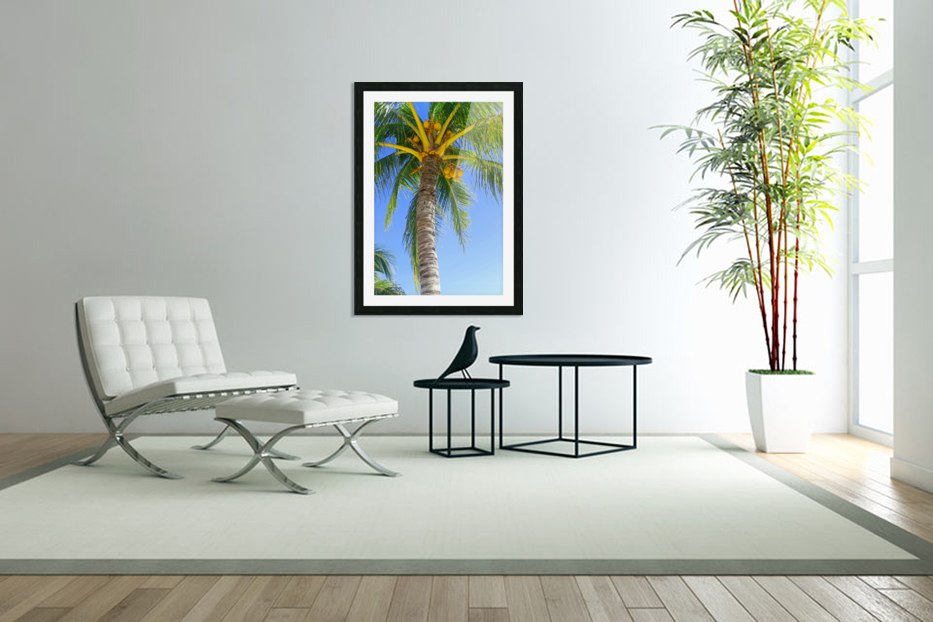 Palm Tree and Coconuts in Custom Picture Frame