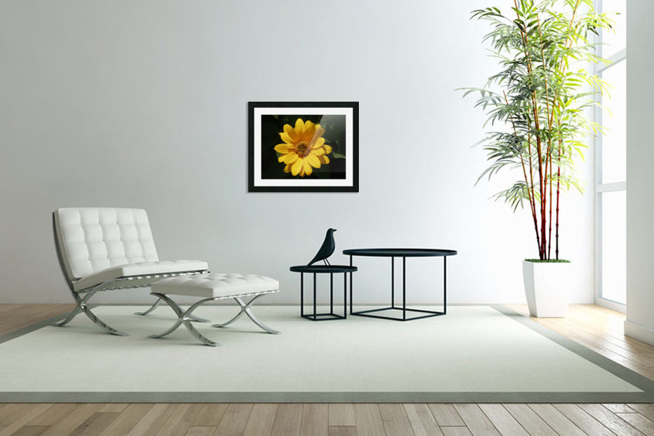 Yellow Zinnia in Custom Picture Frame