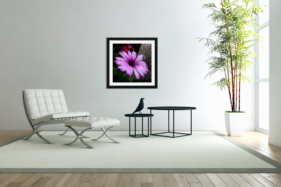 Violet flower with raindrops in Custom Picture Frame