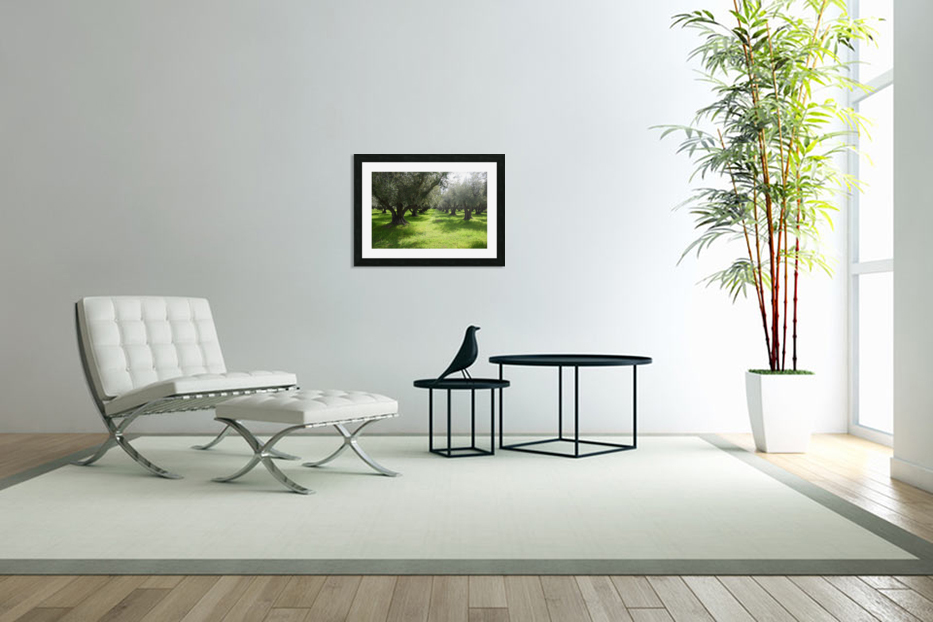 Olive Orchard In Spring in Custom Picture Frame